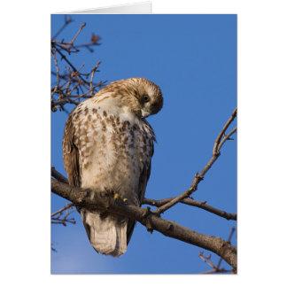 The Chicken Hawk Card