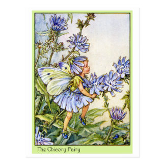 The Chicory Fairy Postcard