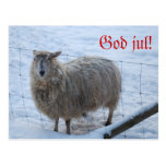 The Christma card sheep feather Postcard