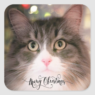The Christmas Cat Envelope Stickers