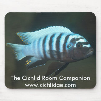 The Cichlid Room Companion - Metriaclima zebra Mouse Pad