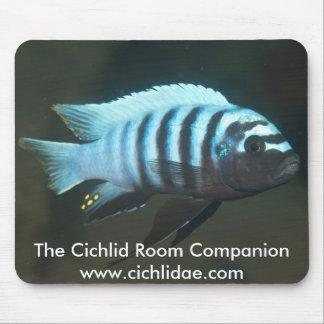 The Cichlid Room Companion - Metriaclima zebra Mouse Pad