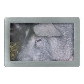 The Cinta senese very ancient tuscan breed of pig Belt Buckle