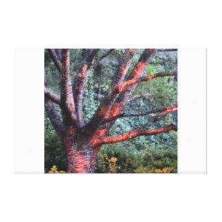 The Climbing Tree Canvas Print