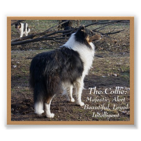 The Collie: Poster