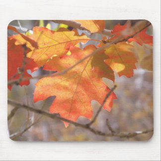The Color Of Autumn Mousepad