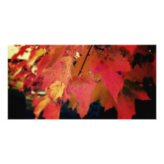 The Color of the Fall Photography Art  Photo Card