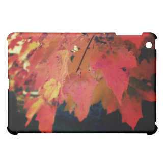 The Color of the Fall Photography Art  Speck Case Cover For The iPad Mini