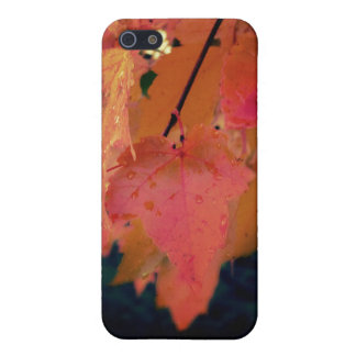 The Color of the Fall Photography Art  Speck Case iPhone 5 Cover