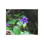 The Color Purple Stretched Canvas Print