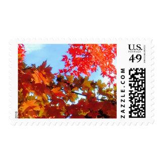 The Colors of Fall in Omaha  Original Digital Art Postage