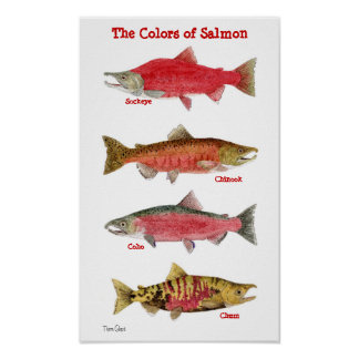 The Colors of Salmon Posters
