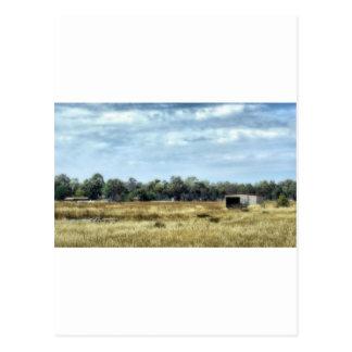The Colour of Summer - Australia Postcards