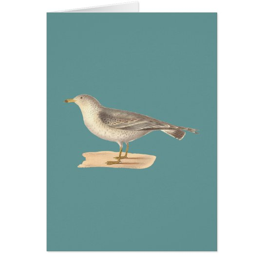 The Common American Gull	(Larus zonorhyncus) Card