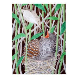 The Common Cuckoo Postcard