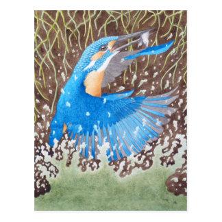 The Common Kingfisher Postcard