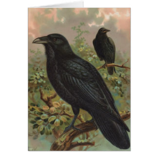 The Common Raven Vintage Bird Illustration Card