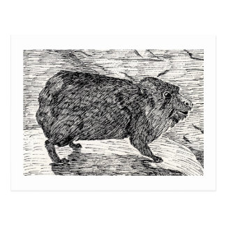 The cony Or Syrian Rock Hyrax Post Card