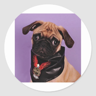 The Cool Pug Classic Round Sticker