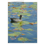 The Coot Card