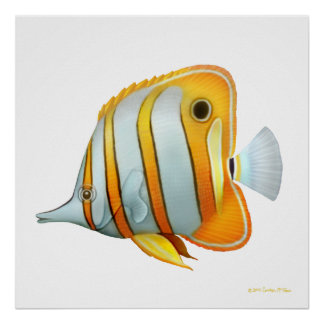 The Copperband Butterfly Fish Study Poster