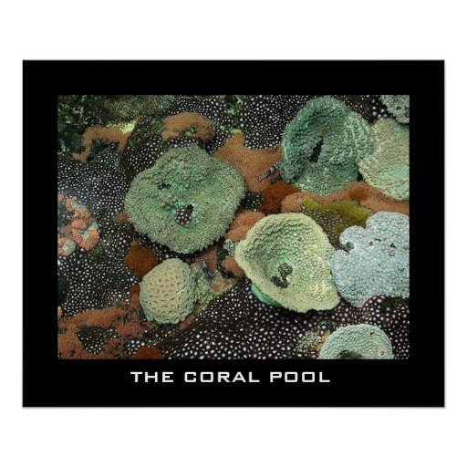 The coral pool poster