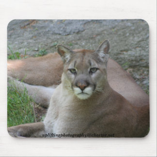 The cougar mouse pad