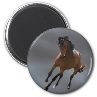 The cowboy horse called Riboking Magnet