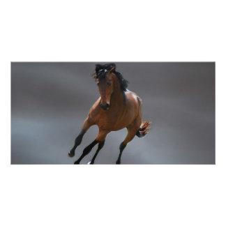 The cowboy horse called Riboking Photo Card