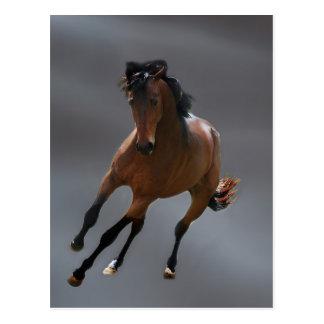 The cowboy horse called Riboking Post Card
