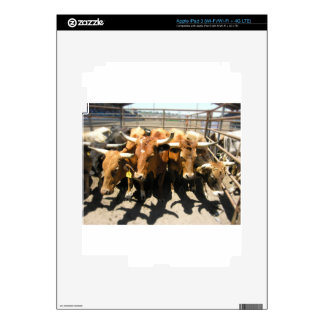 The cows came home iPad 3 skins