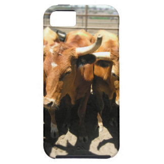 The cows came home iPhone SE/5/5s case