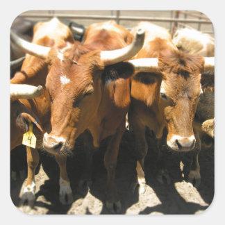 The cows came home square sticker