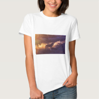 THE COYOTE T SHIRT