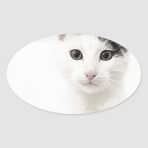 The Cozy Cat Oval Sticker