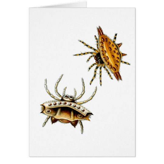 The crab spider and spiny orb-weaver card