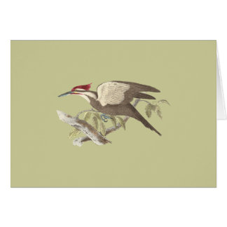 The Crested Woodpecker(Picus pileatus) Greeting Card