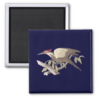 The Crested Woodpecker(Picus pileatus) Magnet