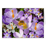 The Crocus Taster Greeting Cards