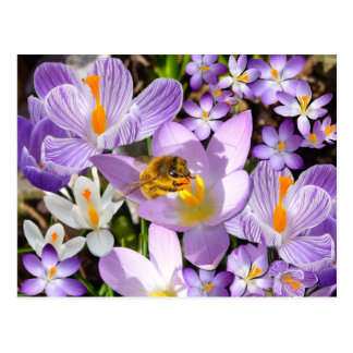 The Crocus Taster Postcard