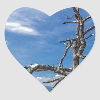 The Crooked Tree Heart Sticker