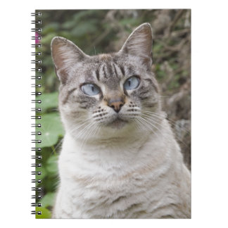 The cross eyed cat spiral note books