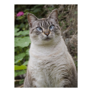 The Cross Eyed Cat Poster