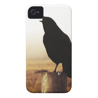 The Crow iPhone 4 Covers
