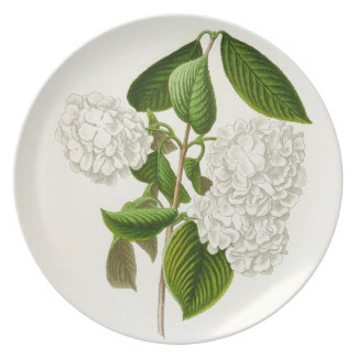 The Crumpled Gueldres Rose Dinner Plate