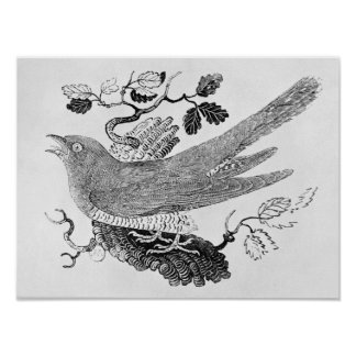 The Cuckoo Print