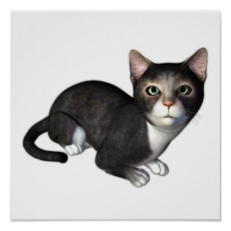 The Curious Gray Kitten Poster