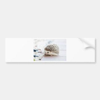 The Cute Baby Hedgehog Bumper Sticker