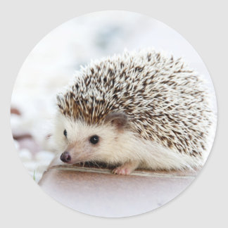 The Cute Baby Hedgehog Classic Round Sticker