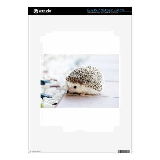 The Cute Baby Hedgehog iPad 3 Decal